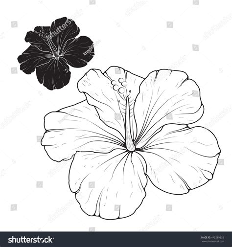 hibiscus flower outline www pixshark com images