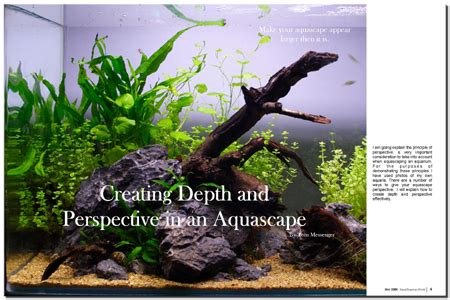 how to make aquascape aquascaping world magazine creating depth and perspectve in an aquascape