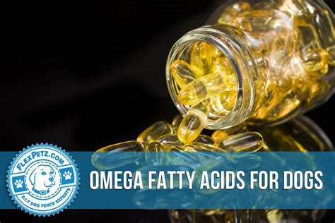 omega 3 fatty acids for dogs omega fatty acids for dogs
