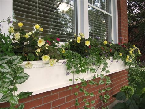 house with window boxes window boxes window boxes pinterest