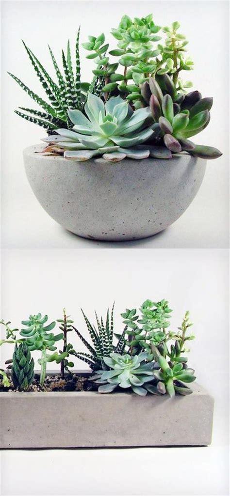 concrete succulent planter windowsill succulent yard