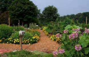 why plant a sustainable garden journal garden design