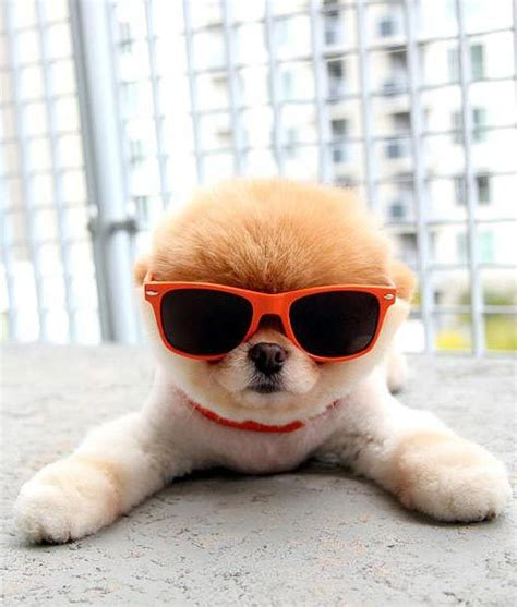 10 Cutest Sunglasses For by 10 Best Images About Boo On Real Cutest