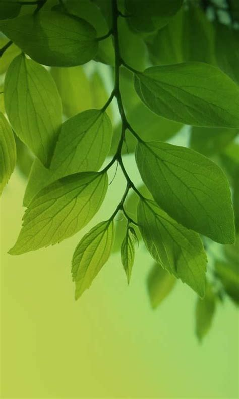 Leaf Live Wallpaper by Magic Leaf Live Wallpaper Android Apps On Play