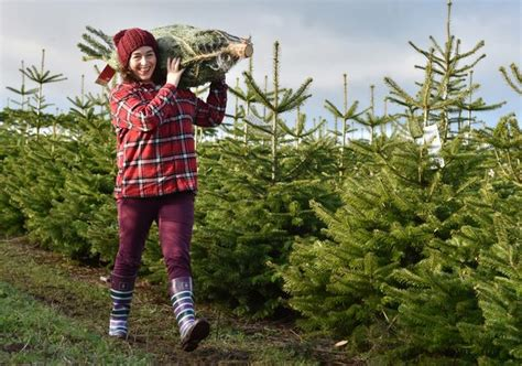 christmas 2016 13 places to pick your own tree get surrey