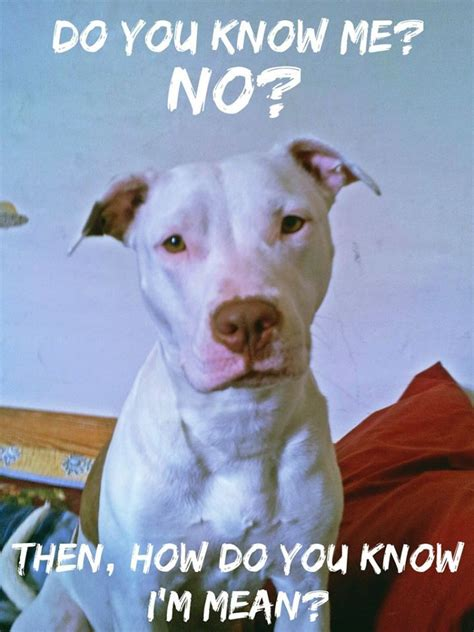 born raised meaning 17 best images about pit bull pics on pinterest adoption