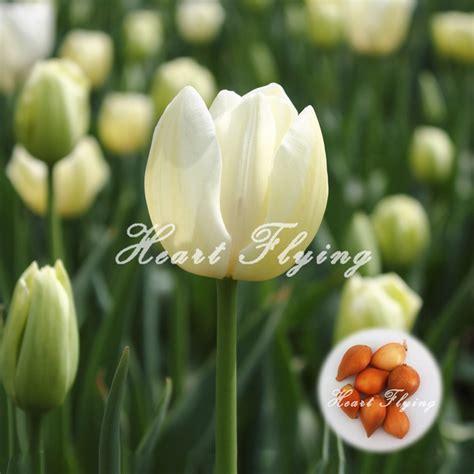 Benihbijibibit Bunga Tulip Blanc achetez en gros blanc tulipe en ligne 224 des grossistes blanc tulipe chinois aliexpress