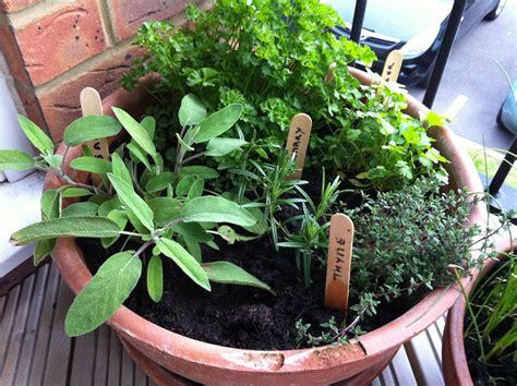 Balcony Herb Planter by Balcony Herb Garden Wandering Angie