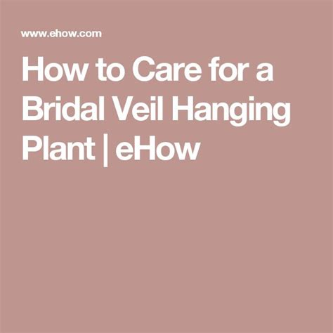 How To Care For A Bridal Veil Plant Garden Guides | 91 best flower succulent projects images on pinterest