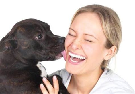 why do dogs humans why do dogs humans why dowhy do