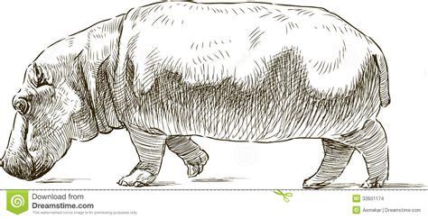 sketchbook of a zoo hippopotamus stock images image 33601174