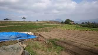 Rumah Di Raya Malang tanah dijual dijual tanah strategis pinggir jalan raya