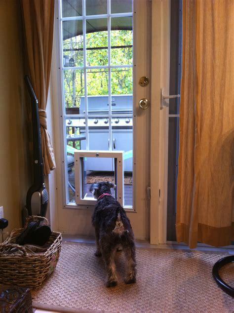 pet door installation locations doors cat doors