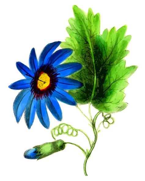 flower image clipart passion flower