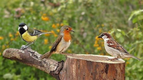 which birds that sing in the morning birds singing in the morning garden birds and bird sounds