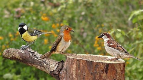 birds singing in the morning garden birds video and bird