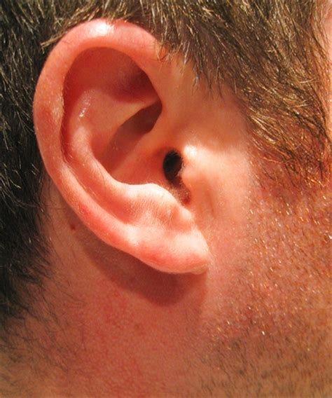 ear right 104 365 flickr photo
