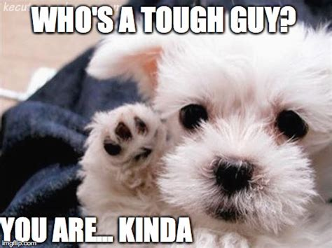 Tough Guy Meme - who s a tough guy imgflip