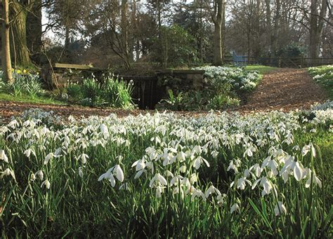 best places to see snowdrops the english garden