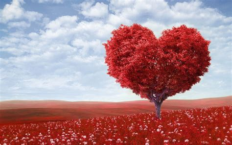 beautiful love beautiful love backgrounds 58 images
