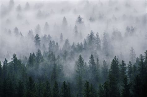 Mural Designs For Wall wall mural forest fog photo wallpaper forest happywall