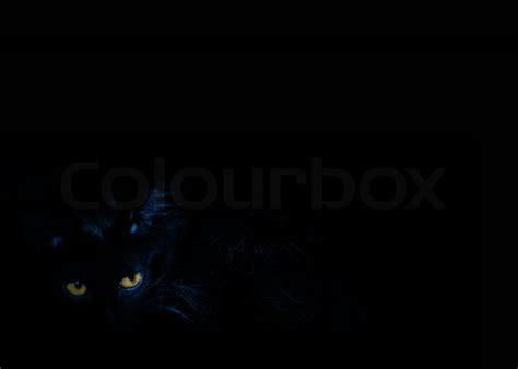 Caterpillar Ct11248 Free Box Yellow Black the black cat with yellow on the black background stock photo colourbox