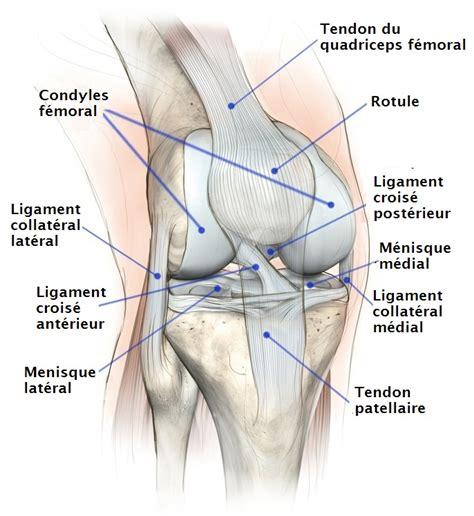 synovite du genou ou epanchement de synovie symptomes et traitement