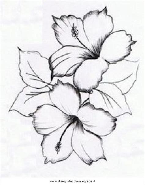 hibiscus flower drawing coloring pages