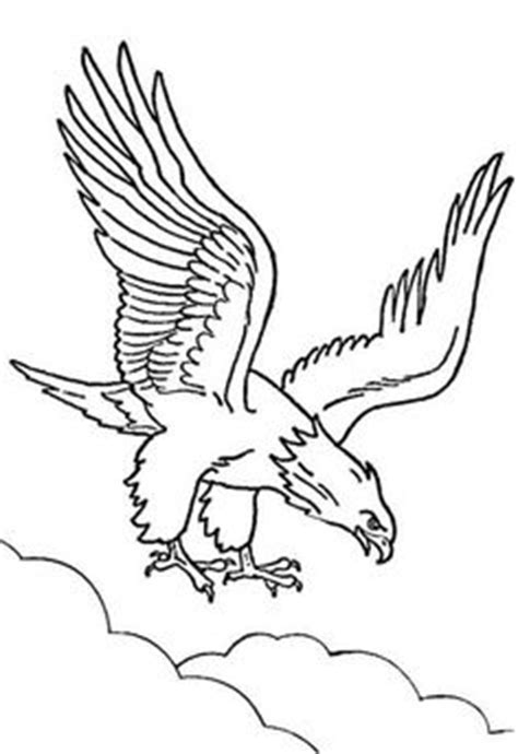 wedge tailed eagle colouring pages sea eagle coloring page wedge tailed eagle colouring pages eagles pinterest