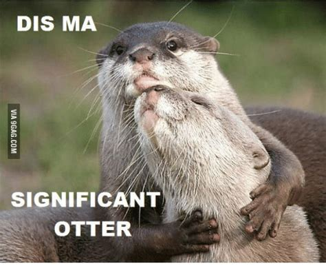 best dis 25 best memes about i made dis otter i made dis otter memes