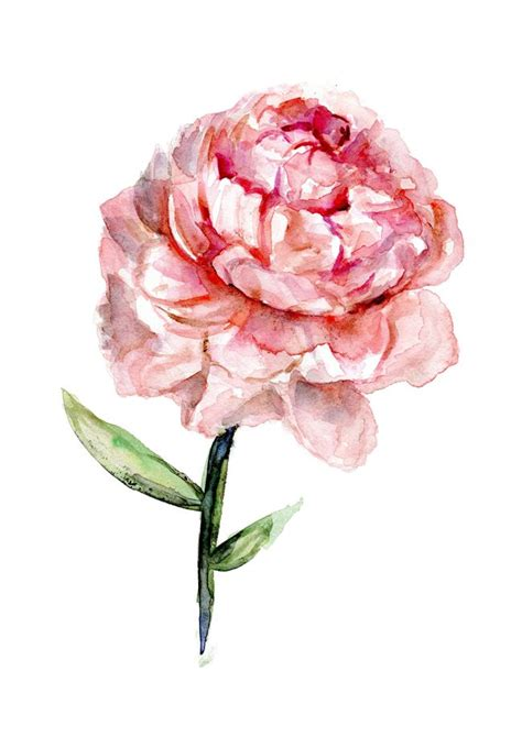 watercolor tattoo peony 178 best images about watercolor peonies on