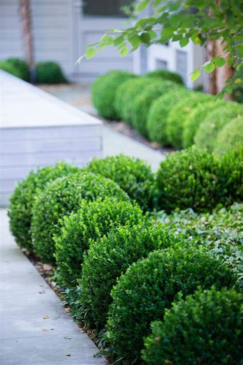Garden Shrubs Ideas Peterfudge More Boxwood Best Shrub Ideas On Landscaping Efbbcdfefb City Gardens Front