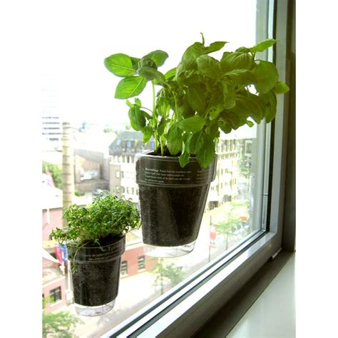 Window Herbs Windowherbs Transparent Suction Cup Herb Pots The