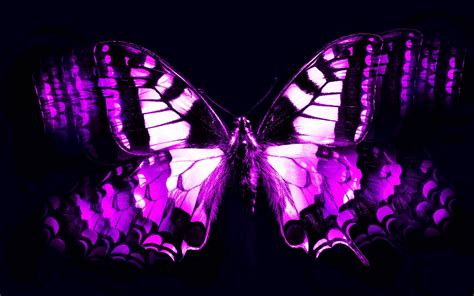 Cool Car Wallpapers For Desktop 3d Butterflies Wall by Purple Butterfly Wallpapers Wallpaper Cave