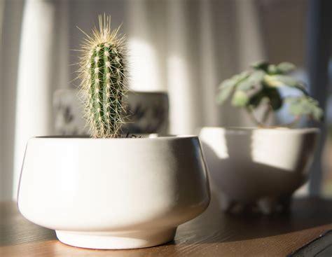 cactus plant  brown pot  stock photo