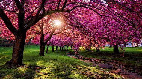 spring scenery wallpaper beautiful spring scenery lake hd
