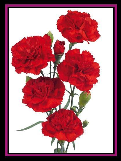 imagenes hermosas de amor con brillo imagenes de claveles con movimiento y brillo y frases