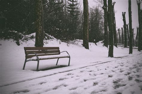 bench in snow bench in a park covered by the snow nature photos on