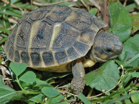lada per tartarughe d acqua tartaruga di terra o di acqua aiutino rettili