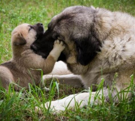 cycle of a puppy facts about cycle daily discoveries