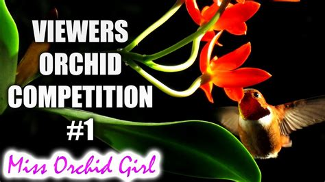Catleya Syari viewers orchid competition 1 let s start the vote