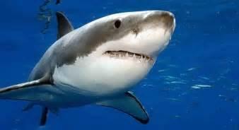 film barat ikan hiu 5 ikan hiu yang paling besar di dunia party join us