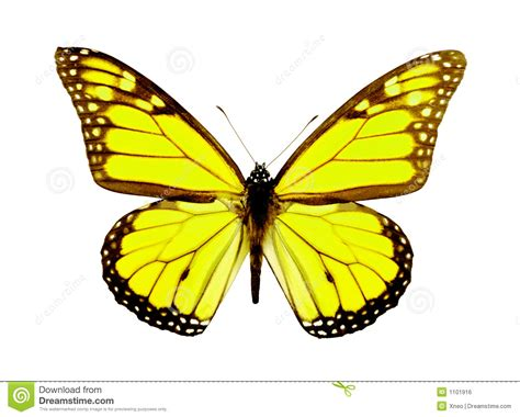 24 best yellow butterfly meaning images on yellow butterfly pictures www pixshark images