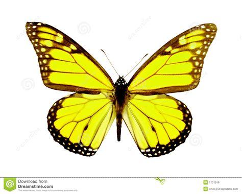 imagenes mariposas libres mariposa amarilla stock de ilustraci 243 n ilustraci 243 n de