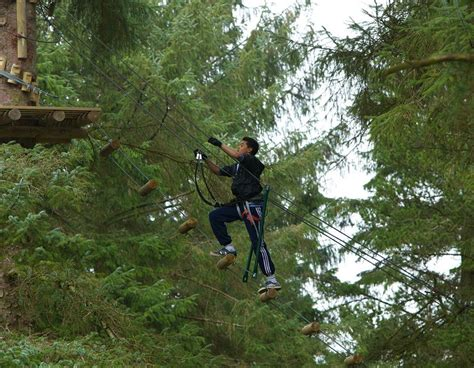 Forest Saturday Mba by Zipit Forest Adventure Reopens Boyle Today Your News