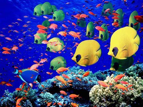 dive holidays sea or maldives diving dive reviews reports