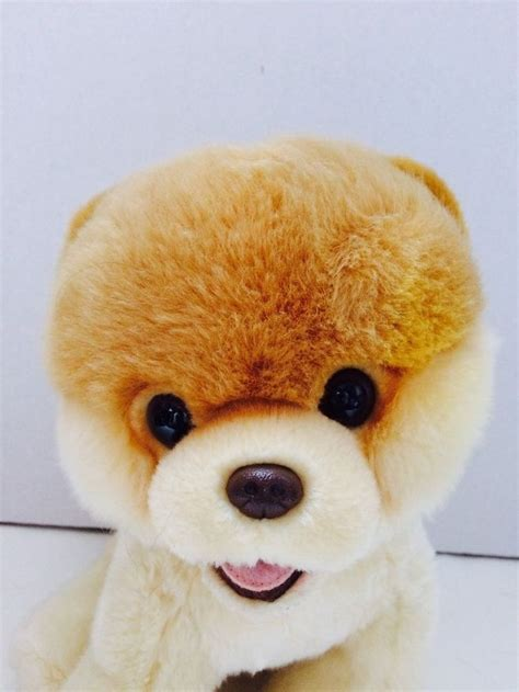 boo the pomeranian stuffed animal 17 best ideas about world cutest on boo dogs and teacup dogs