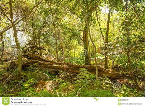 Free Landscape Design App African Jungle Landscape Stock Photo Image 68968539