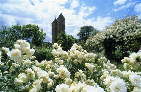 Pikmin 2 White Flower Garden Garden Ftempo Pikmin 2 White Flower Garden