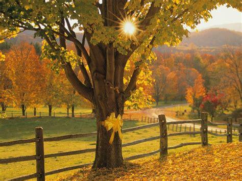 tie  yellow ribbon    oak tree pixdaus